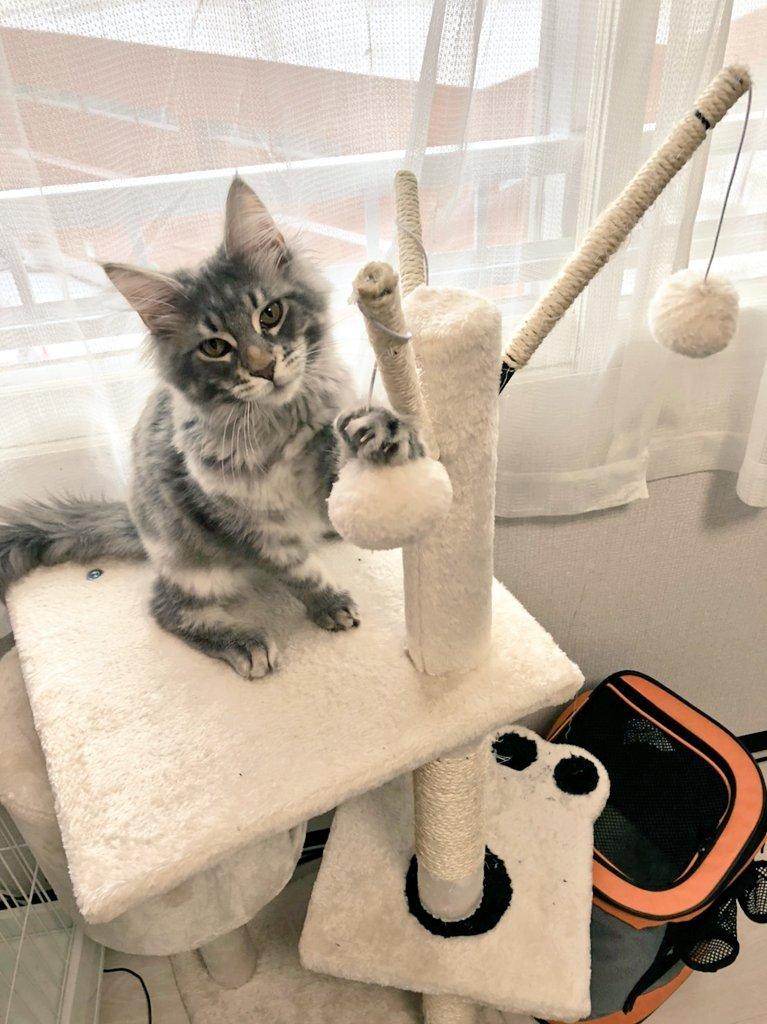キャットタワーで遊んでいる猫